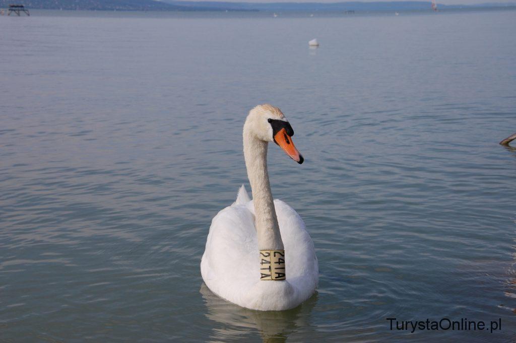 Jezioro Balaton 8