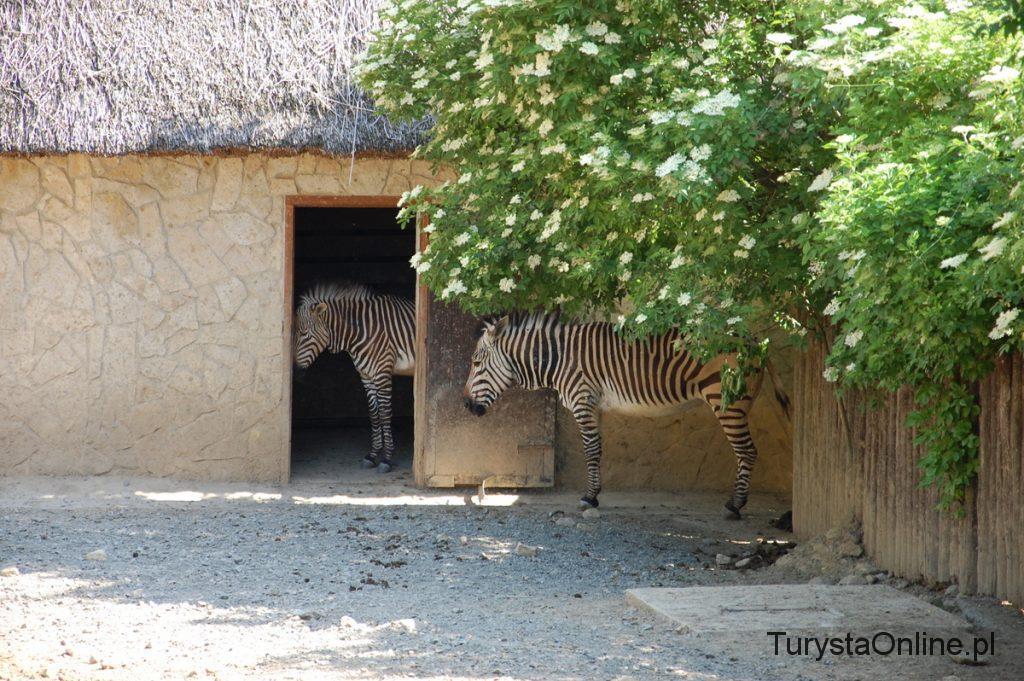 zoo Bojnice 11