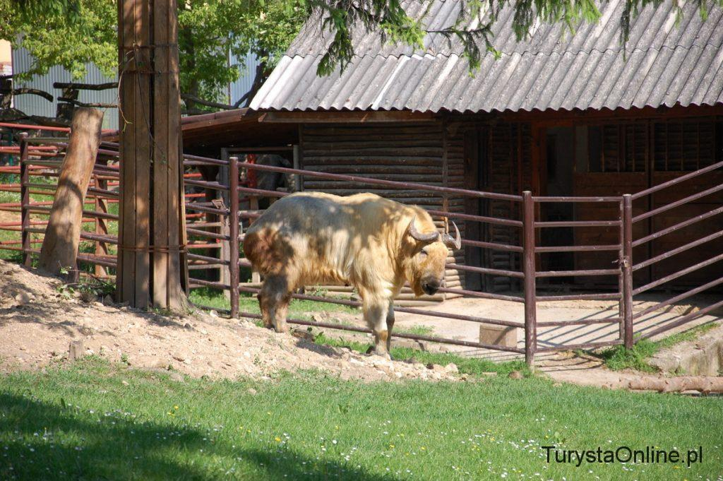 zoo Bojnice 12