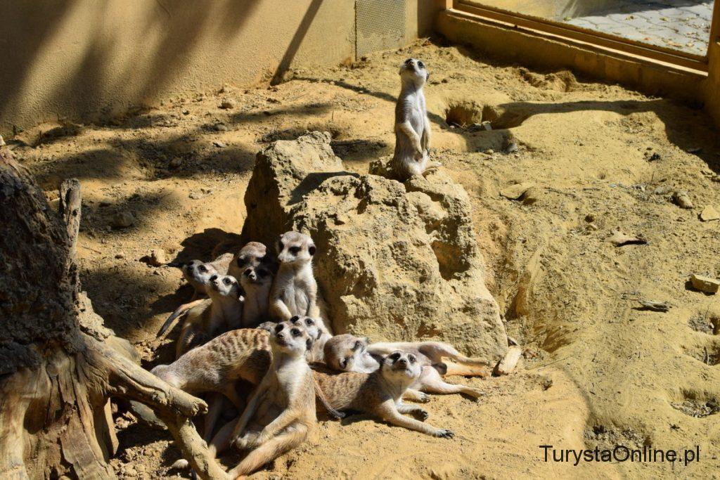 zoo Bojnice 16