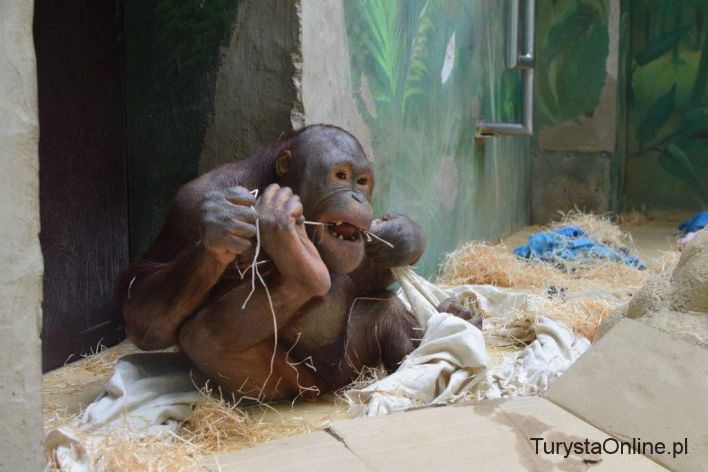 zoo Bojnice 7